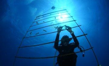 Coral Nursery Ladder At St Maarten Reef